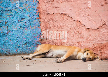 kleine welpen hund schlafen im korb stockfoto bild 59029347 alamy. Black Bedroom Furniture Sets. Home Design Ideas