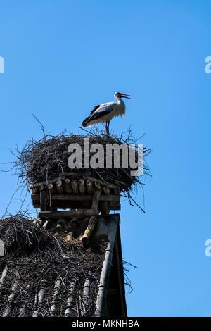Weißstorch in seinem Nest auf dem Dach des Gebäudes toop, Podlasien, Polen - Stockfoto