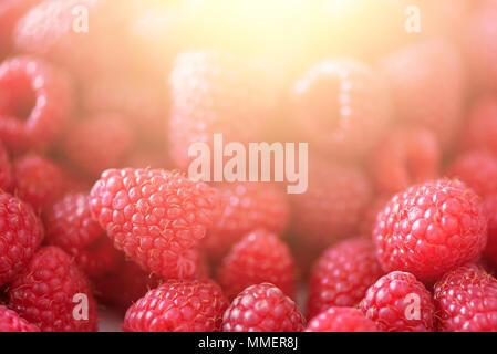 Reife Himbeeren Makro. Selektive konzentrieren. Obst Hintergrund mit kopieren. Sonnige Sommer und Beeren Konzept der Ernte. Sonnenlicht Wirkung. Vegan, vegetaria - Stockfoto