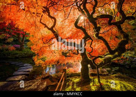 Herbst Farben, japanischer Garten, Butchart Gardens, Brentwood Bay, Vancouver Island, British Columbia, Kanada - Stockfoto