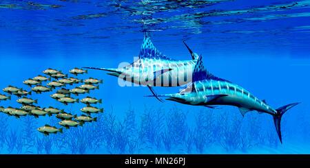 Marlin und Bocaccio Rockfish - Räuberischen Blue Marlin Fischen Jagen eine Schule der Bocaccio Rockfish über einen Kelp Bett auf dem Meeresgrund. - Stockfoto