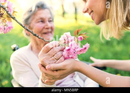 Ältere Großmutter im Rollstuhl mit Eine nicht erkennbare erwachsenen Enkelin außerhalb im Frühjahr die Natur. - Stockfoto