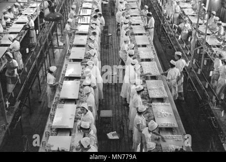Hohe Betrachtungswinkel von Frauen bei der Arbeit in der Grapefruit Konservenfabrik, Winter Haven, Florida, USA, Arthur Rothstein für US-Umsiedlung Verwaltung, Januar 1937 - Stockfoto