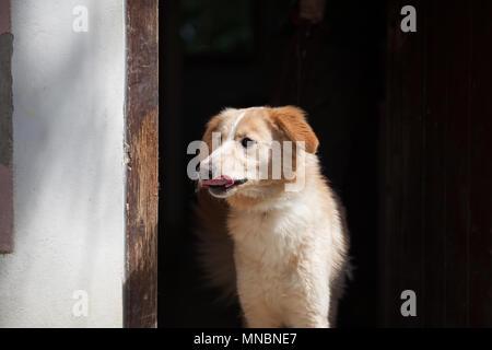 Hund Welpen im Tierheim auf der Suche nach Familie - Stockfoto