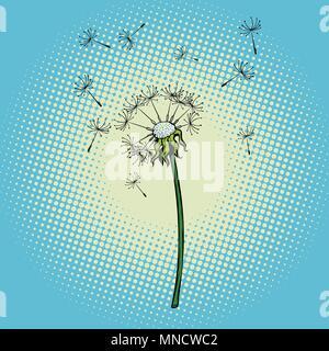 Löwenzahn Blume Flaum der Wind - Stockfoto