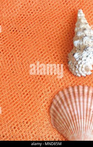 Muscheln auf orange Net, Sommer vertikale Hintergrund von oben - Stockfoto