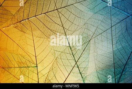 Helle Skelett Blätter gelb und blau Farbe Hintergrund. Schöne künstlerische Makro Foto - Stockfoto
