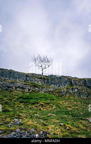 Einsamer Baum auf felsvorsprung Yorkshire Dales Landschaft, England, Großbritannien - Stockfoto
