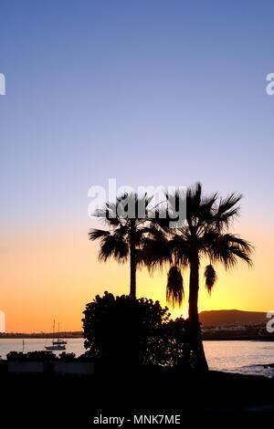 Zwei Palmen sind gegen die Silhouette Silhouette wie die Sonne über Playa Blanca im Süden von Lanzarote. Eine der spanischen Kanarischen Inseln - Stockfoto