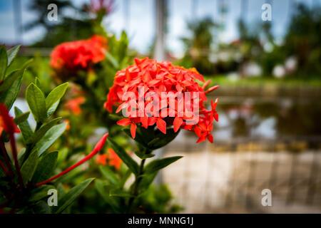 Rote Blumen - Stockfoto