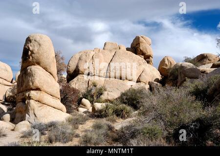Monzogranite rock Pile, Deiche (intrusion Linien von härterem Gestein) im Granit, Joshua Tree, Yucca Buergeri, Mojave Yucca, Yucca shidiger 031129_0438 - Stockfoto