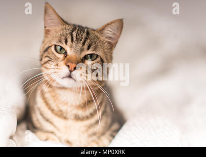 Schöne böse Katze zu Hause - Stockfoto
