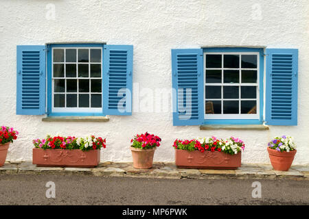 wei es haus mit blauen fensterl den pflanzen wachsen in den wannen und boxen st mawes cornwall. Black Bedroom Furniture Sets. Home Design Ideas