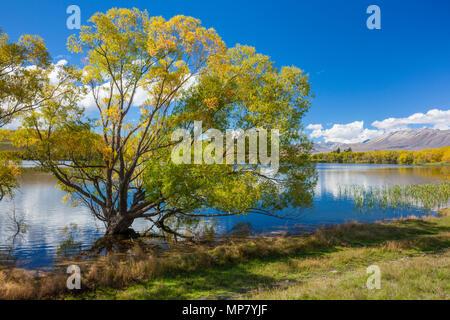 See Mcgregor in der Nähe von tekapo Neuseeland Südinsel Neuseeland Landschaft See Region Canterbury mackenzie Bezirk Neuseeland Südinsel nz - Stockfoto