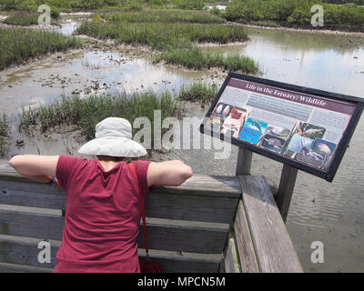 Touristische lernt über den Matanzas River Estuary in St. Augustine, Florida, USA, 2018, © katharine Andriotis - Stockfoto