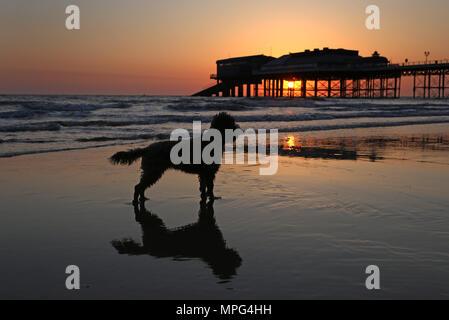 Cromer Pier, Norfolk. 22. Mai, 2018. UK Wetter: Ein Hund am Strand spazieren, als die Sonne hinter Cromer Pier auf einem schönen Start in den Tag in Cromer, North Norfolk, am 22. Mai 2018. Credit: Paul Marriott/Alamy leben Nachrichten - Stockfoto