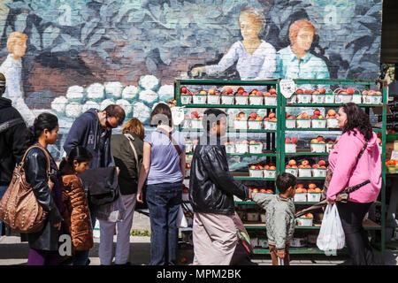 Toronto Kanada Ontario St. Lawrence Market shopping Bauern-Markt Verkäufer Kaufmann Freestone Pfirsiche frisches Obst Landwirtschaft als - Stockfoto