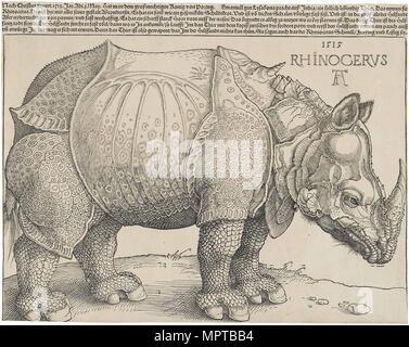 Das Nashorn. - Stockfoto