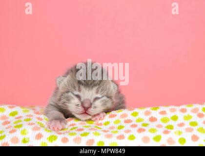 Kleine graue abgestreift Tabby neugeborenen Kätzchen, fünf Tage alt und die Augen immer noch geschlossen Festlegung auf ein Pastell spotted Blanket paw Vorwärts süß schlafen. Rosa ba - Stockfoto
