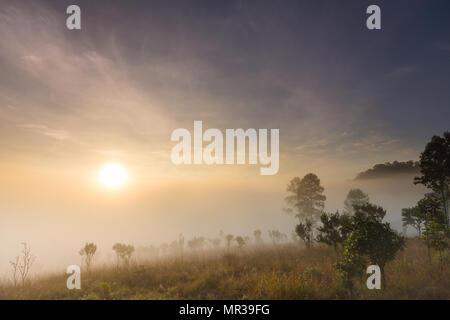 Schönen Sonnenaufgang mit nebligen Umgebung in nationalen öffentlichen Park von Thailand - Stockfoto