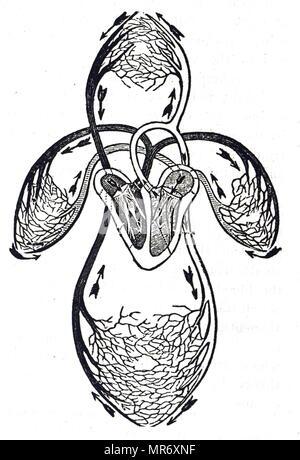 Diagramm eines Herzens Stockfoto, Bild: 52079198 - Alamy