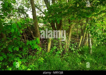Woodland fenceline - Stockfoto