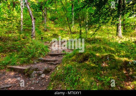 Die Sonne fällt durch das grüne Laub der Bäume neben Grobe aufsteigend Schritte, teilweise Ausblenden große Felsen, auf einem unbefestigten Pfad an Killicrankie Schlucht - Stockfoto