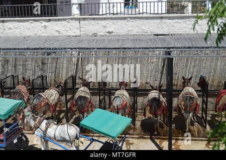 Typische Esel von Mijas nach einem heißen Arbeitstag. August 4, 2016. Reisen Architektur Urlaub. Mijas Malaga Andalusien Spanien. - Stockfoto