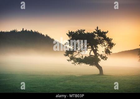 Misty Morning mit einsamer Baum im Feld. - Stockfoto
