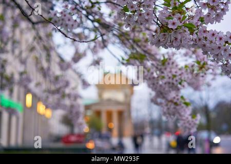 Berlin, Deutschland - 2. April 2017: Blick auf das Brandenburger Tor zwischen Blumen in Berlin - Stockfoto