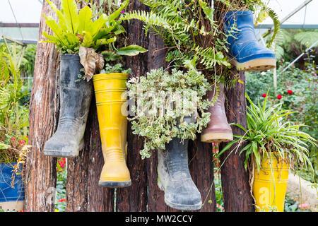 Gummistiefel wiederverwendet mit Pflanzen hängt am Baum im Freien - Stockfoto