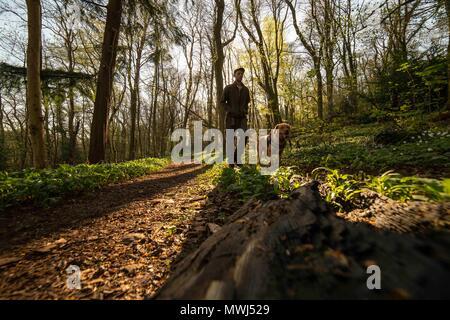 Ein Mann und sein Hund Spaziergang durch den Wald. - Stockfoto