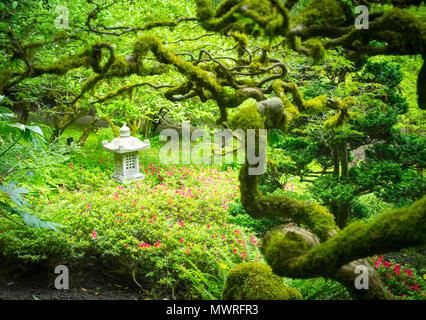 Moos bedeckt Zweige, japanische Ahorne, und ein Japanisches Stein Laterne der Japanische Garten in die Butchart Gärten schmücken im Sommer. Brentwood Bay, Kanada. - Stockfoto