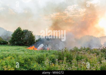 Wald wildfire. Verbrennen von trockenem Gras und Bäumen. Starker Rauch gegen den blauen Himmel. Wildes Feuer durch heiße windiges Wetter im Sommer. - Stockfoto