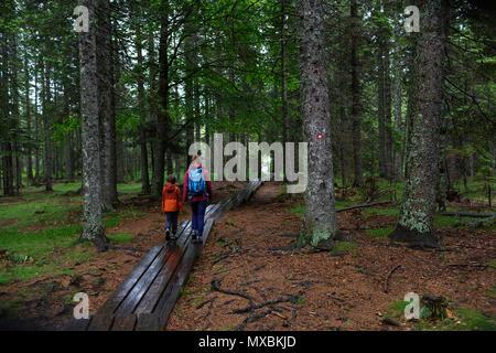 Mutter und Sohn Wandern auf holzsteg im dichten Pinienwald - Stockfoto