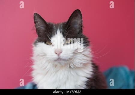 Katze auf rosa Hintergrund