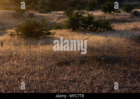 Sonnenuntergang in der Savanne im Mashatu Private Game Reserve in Botswana - Stockfoto