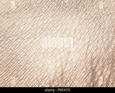 Rhino Haut Textur Hintergrund - Stockfoto