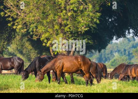 Gruppe von drei jungen Pferde auf der Weide - Stockfoto