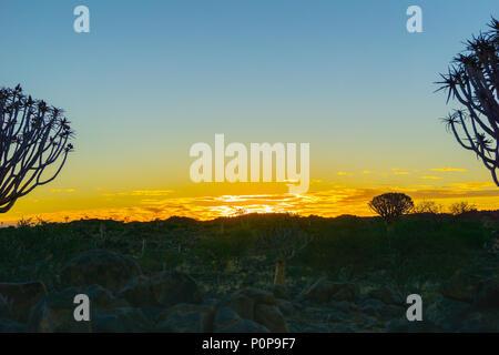 Brillante sonnenuntergang himmel über Silhouette Köcherbaum Landschaft durch Zweige und Blätter in Keetmanshoop, Namibia eingerahmt. - Stockfoto