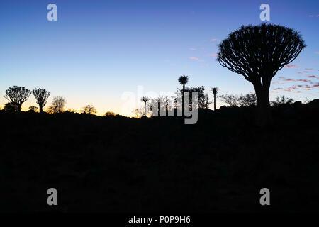 Sky vor Sonnenaufgang im Köcherbaumwald in Namibia. - Stockfoto