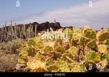 Buenavista del Norte, Spanien, Blick zum Leuchtturm Faro de Punta de Teno - Stockfoto