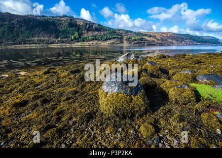 Algen bedeckt Felsbrocken am Ufer des schönen Loch Sunart in den Highlands von Schottland - Stockfoto
