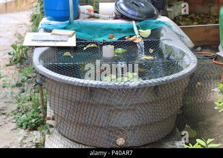 Tanque com caseira criação de peixe Wels e Carpa, em Residência localizada em Cajamar. - Stockfoto