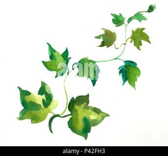 Aquarell Efeu Pflanze