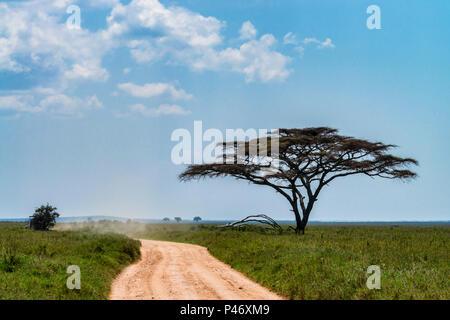 Straße in der Savanne schöne Landschaft - Stockfoto