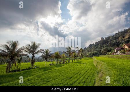 Sonnenuntergang auf munduk Reisfeldern und Berg in Bali. - Stockfoto