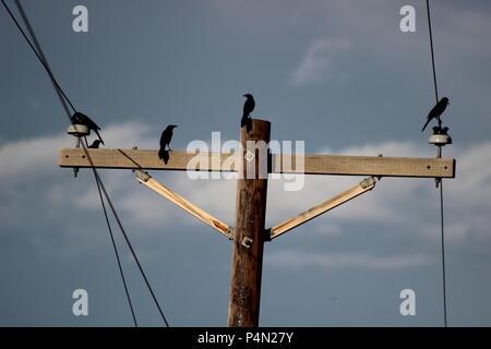 Vögel auf einem Draht gegen bewölkten Himmel. In Schwarz und Weiß ...