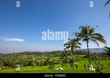 Zwei Hütten in üppigen grünen Reis-Terasse in Sidemen, Bali, Indonesien - Stockfoto