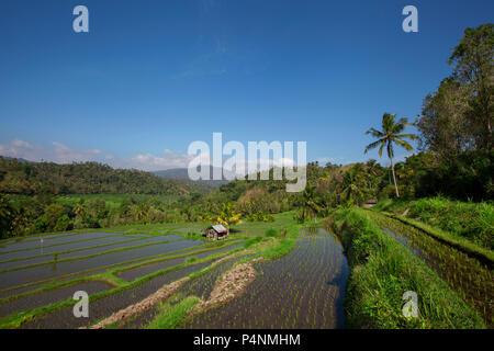 Weite grüne Reisterrassen auf Bali - Stockfoto